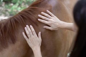 Mains en soin sur cheval alezan