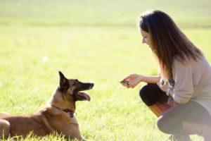 Aude en communication avec un chien