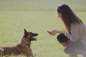 aude et chien