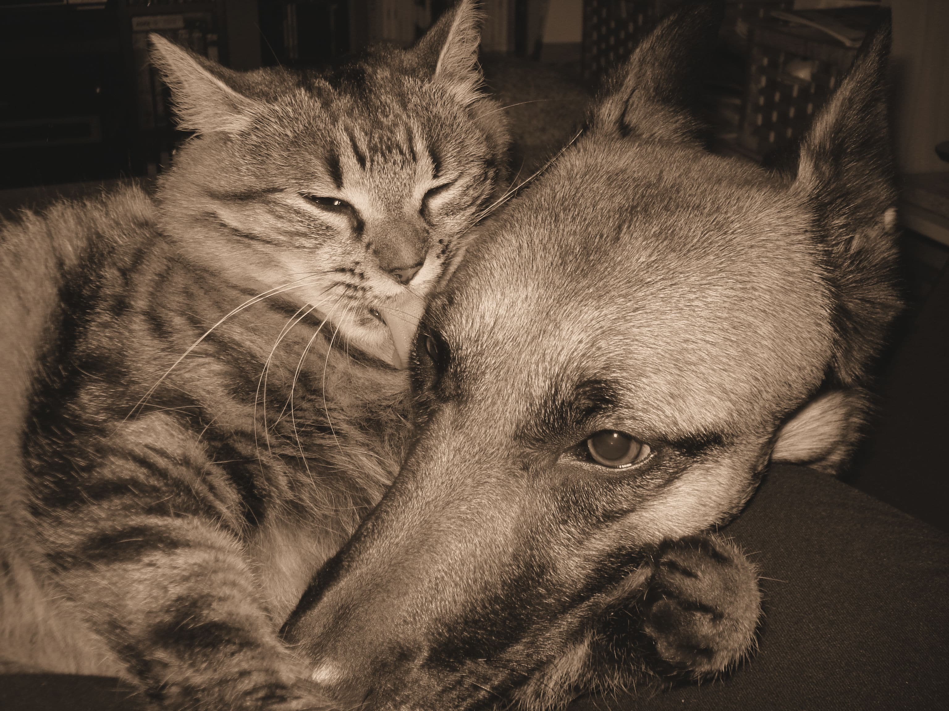 Mes animaux