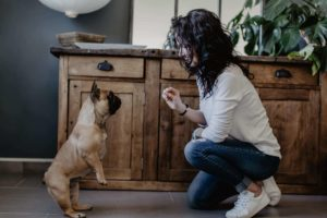 Education canine bulldog